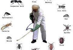 شركة مكافحة حشرات بحوطة بني تميم