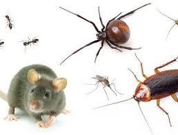 شركة مكافحة حشرات بحريملاء