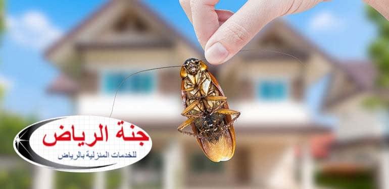 شركة مكافحة حشرات بالدلم