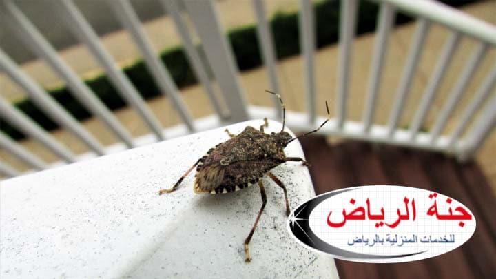 شركة مكافحة حشرات بضرماء